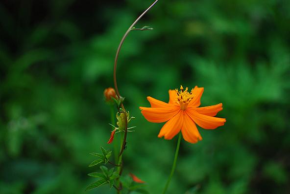 Blg-Flower-4