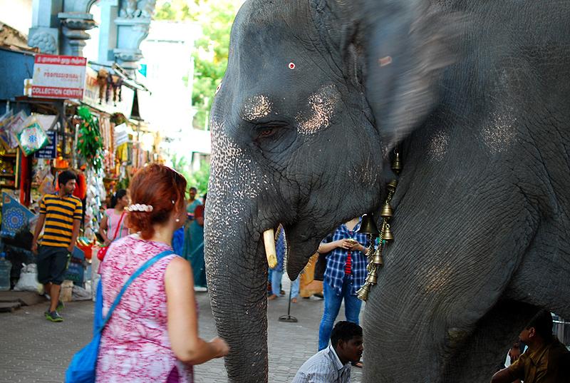 """""""Now listen carefully..."""" said the elephant"""